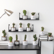Tin Can Cactus Plant Home Deco