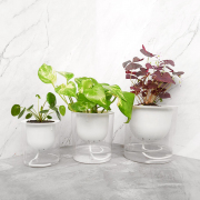 Easy Plant Self Watering Pot Round