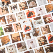 My Cat Photography Flake Stickers Set