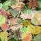 Fallen Leaves Garden Transparent Stickers Set